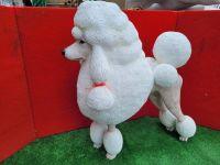 French Poodle - Fiberglass life size