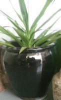 Glazed Tree Planter 370 x 350 H mm - Size 1 - Black